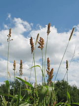 Seeds of Abundance