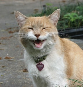 Easy Ways You Can Help Help Stray & Feral Cats This Winter | Moonlady