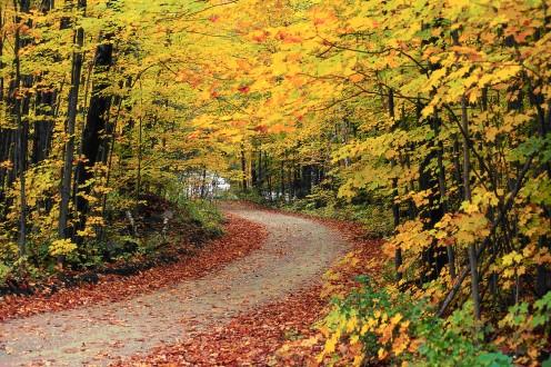 Autumn Equinox: Balance Before the Fall