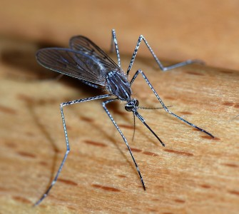 Mosquito Madness: monitoring spray plans / do not spray list / reporting possible West Nile