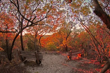 North Texas Wild: Your guide to exploring the Great Trinity Forest