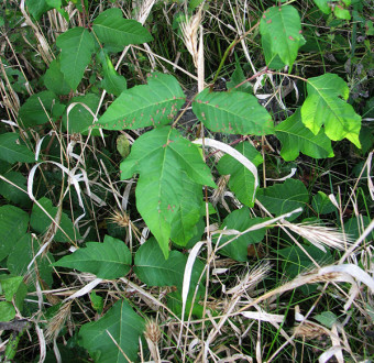Local author's poison ivy book offers relief for the itchy