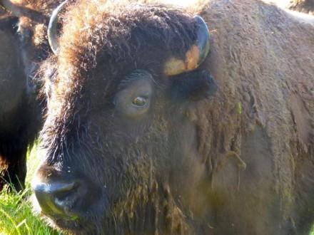 North Texas Wild: Fort Worth Nature Center offers window into region's wild past