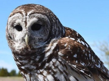 North Texas Wild: WHO you gonna call? Blackland Prairie Raptor Center provides ER for birds of prey