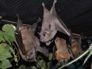 North Texas Wild: Bats hang at Parker County sanctuary while they heal