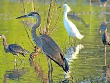 North Texas Wild: Rewilding the Trinity River to be explored at Dallas symposium