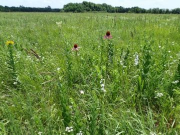 North Texas Wild: Mathews Prairie goes into win column for prairie preservationists