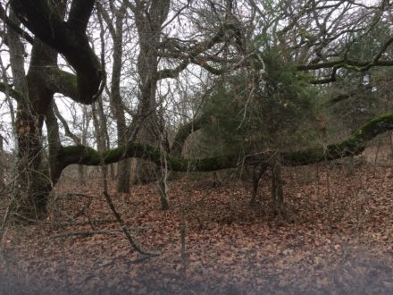 Freaky Feet: Post Oak Preserve in Seagoville: Bushwhacking the Savannah – Jan 27, 2018