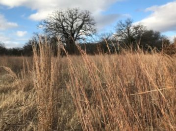 North Texas Wild: Urban prairie hidden in Crawford Park