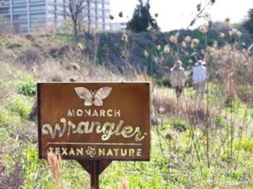 North Texas Wild: Create your own pocket prairie