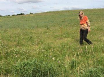 Chisholm Trail Park preserves Fort Worth prairie parcel